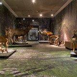 Premier dimanche de novembre au Musée de la nature
