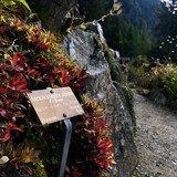 Un repos bien mérité pour les plantes de Flore-Alpe