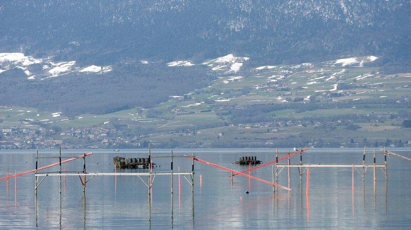 La zone du Forel, entre Chevroux et Estavayer-le-Lac, accueillera les exercices de l'armée le mois prochain.