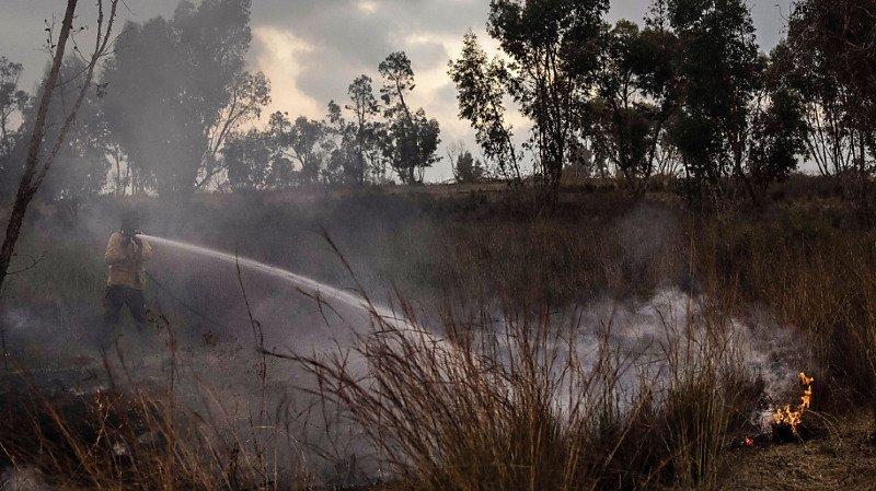 Israël: 5000 personnes évacuées à cause d'une vague d'incendies