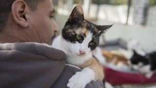 Comportement animal: les chats peuvent parfois imiter les humains