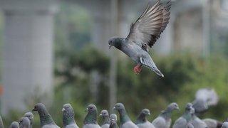 Cerveau: les oiseaux sont capables d'avoir des pensées conscientes