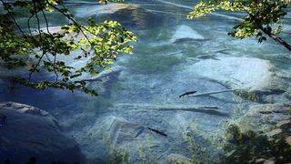 Environnement: les pesticides font des ravages au fond des lacs