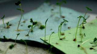 Des graines à planter