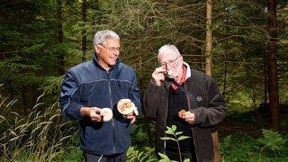 Le Locle: les champignons, même comestibles, sont à consommer avec modération
