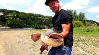 Silures: pêche au gros sur le lac des Brenets