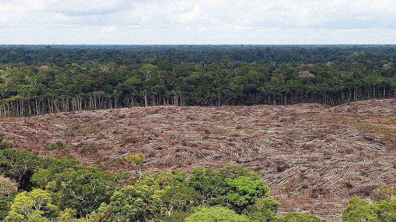 La diversité des espèces est optimale pour les forêts tropicales humides.