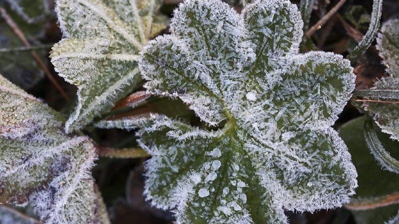 Premier gel dans maints endroits en plaine ce samedi (archives).