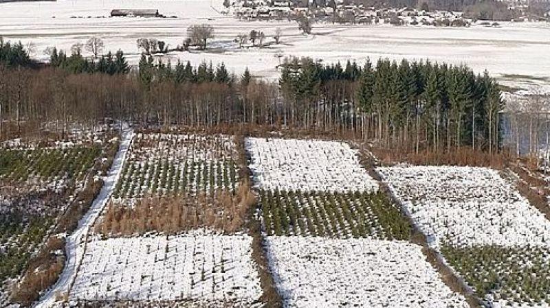 Environnement: tolérance climatique des arbres testée dans toute la Suisse