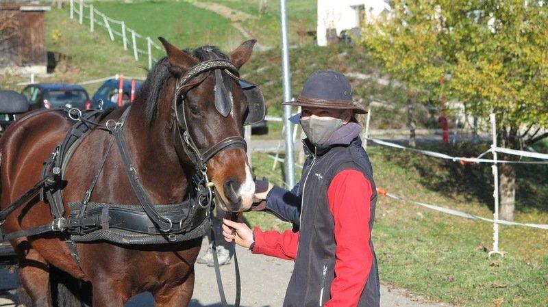 Les Attelages de Fredétaient laseule institution équestre à organiser l'examencette année en Suisse romande.