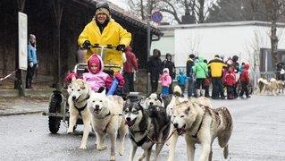 La Fête du chien nordique à Saignelégier n'aura pas lieu en 2021