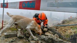 Des chiens sauveteurs à l'entraînement à Neuchâtel