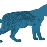 Lynx, où es-tu ?