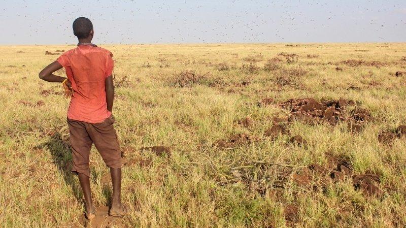 Afrique de l'Ouest: la crise alimentaire «la plus grave de ces dernières décennies»