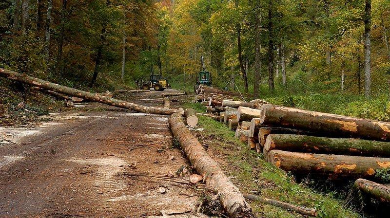 Des «autoroutes» dans les forêts de Val-de-Travers?