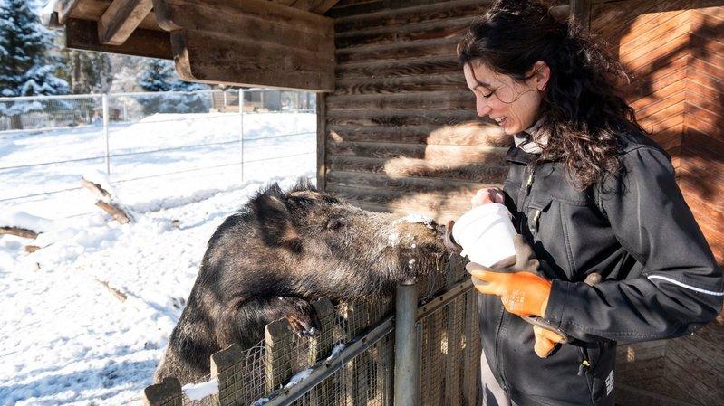 Bois du Petit-Château à La Chaux-de-Fonds: «Les zoos ont un rôle à jouer»