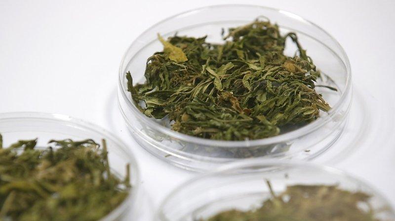 Accès facilité au cannabis médical: oui du National
