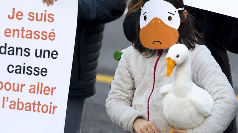#StopFoieGras: l'organisation Quatre Pattes veut sensibiliser la population