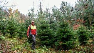 Des forestiers proposent d'aller couper soi-même son sapin de Noël