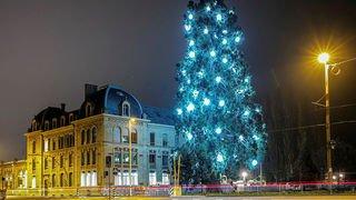 Du haut de ses 30 mètres, un séquoia brille de mille feux à Neuchâtel