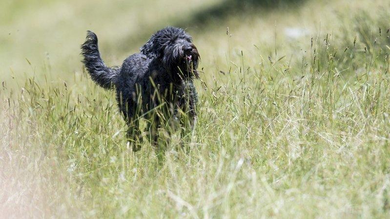 Neuchâtel: cours obligatoires pour les nouveaux propriétaires de chien dès le 1erjanvier