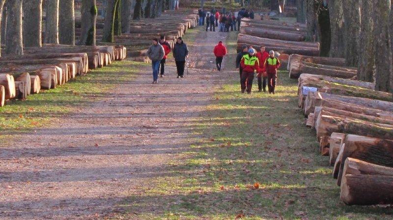 Colombier: quelques records pour la vente de bois précieux de ForêtNeuchâtel