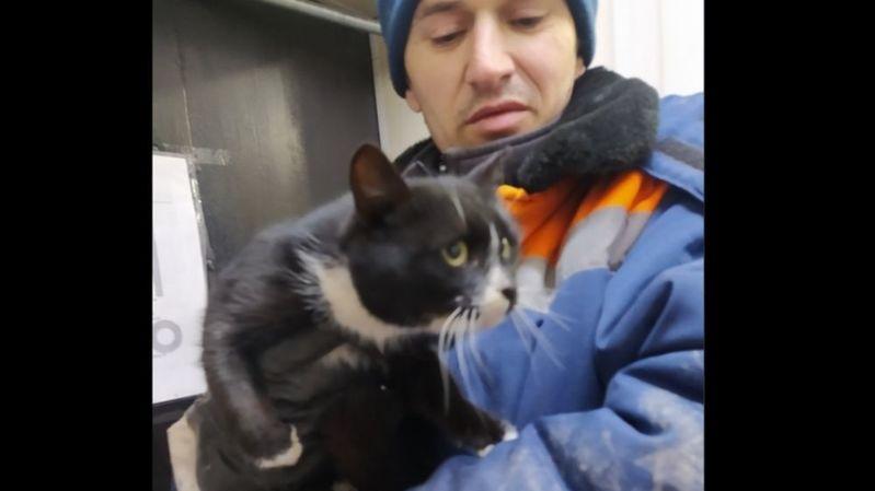 C'est un des employés qui a sauvé le chat de justesse.