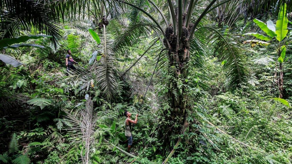 L'huile de palme indonésienne ne compte pas pour grand-chose dans les échanges entre ce pays et la Suisse.