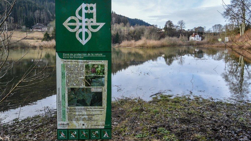 La plaine inondable des Goudebas, aux Brenets, est une zone naturelle protégée, fief d'une fleur aujourd'hui rarissime: la fritillaire pintade.