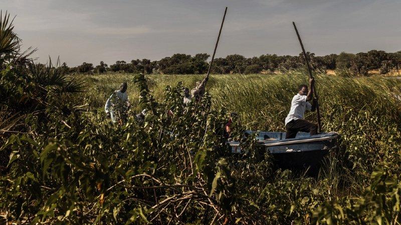 Tchad: 35 morts dans des affrontements entre éleveurs et cultivateurs