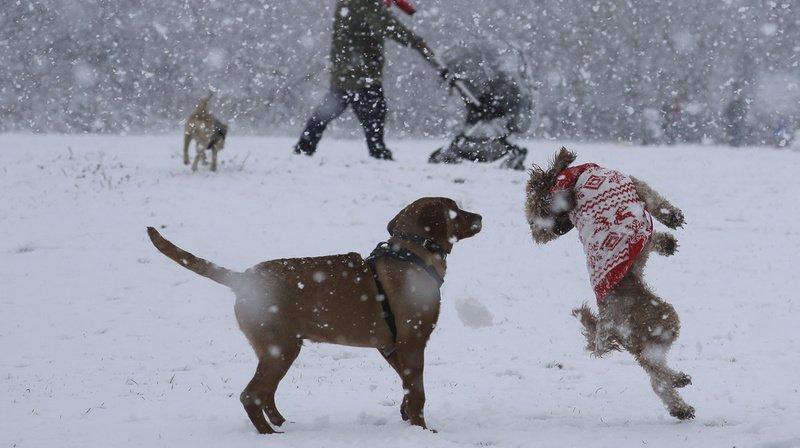 Selon la chercheuse Lindsay Mehrkam, plus grande est l'attention du maître, plus important sera le plaisir du chien.