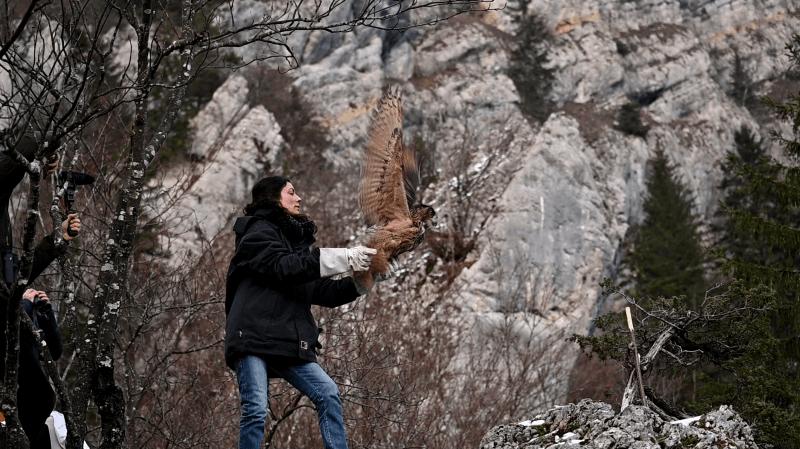 La Chaux-de-Fonds: le hibou soigné au Bois du Petit-Château a été relâché