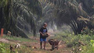 Un comité neuchâtelois contre l'huile de palme
