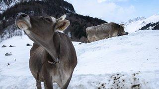 Vaches dans la neige, lever de soleil en Espagne, inondations en Angleterre,...: la galerie photo du 21 janvier 2021