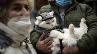 Covid: les adoptions de chats et chiens explosent dans le canton de Neuchâtel