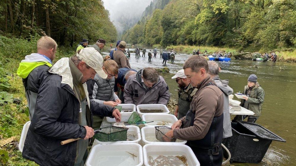 L'inventaire des populations de poissons permet de compléter les statistiques de pêche et les observations des pêcheurs.