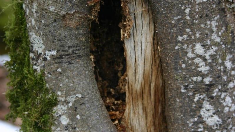 Le Parc Chasseral, paradis des coléoptères