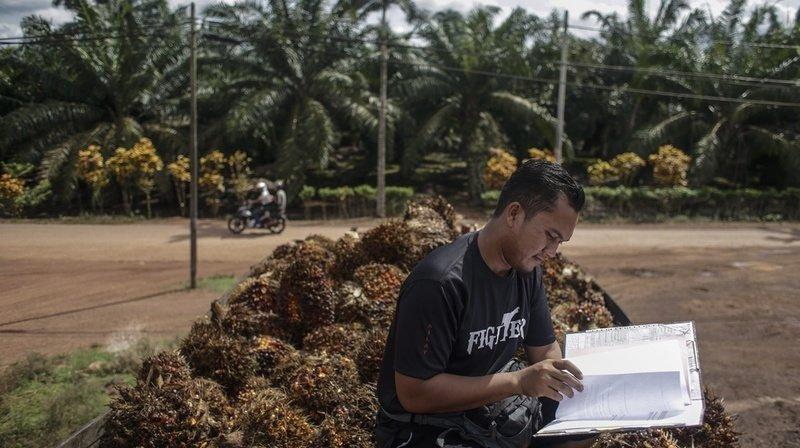 Libre-échange avec l'Indonésie: l'essentiel de la votation en 5 questions