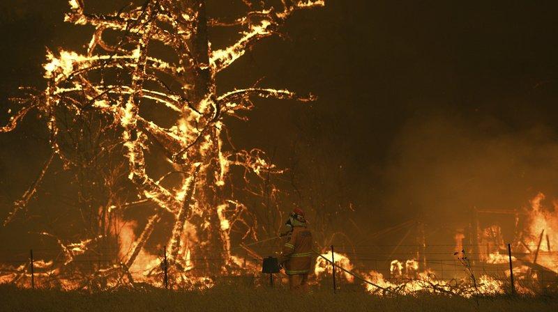 Plus de 5 millions d'hectares de forêts ont brûlé en Australie entre septembre 2019 et janvier 2020.