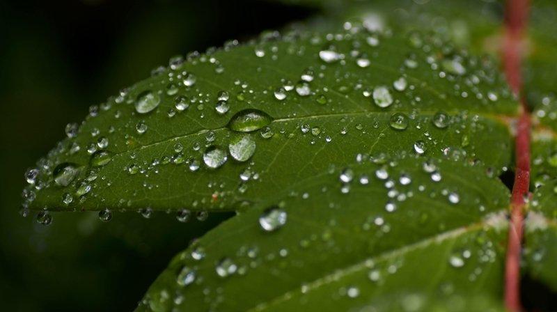 L'innovation de Coat-X produit sur l'eau un effet identique à celui des feuilles de lotus.