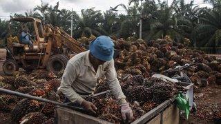 Votations fédérales: victoire du libre-échange avec l'Indonésie, sauf en Romandie