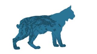 Lynx, qui es-tu ?
