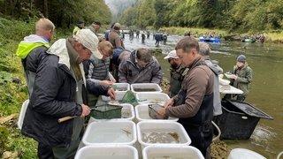 Trois fois plus de poissons dans le lac des Brenets