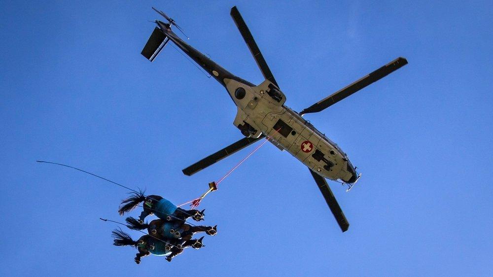 A un certain moment de l'exercice à Saignelégier, c'est même trois chevaux à la fois qui ont été soulevés dans les airs par l'un des Super Pumas de l'armée suisse.