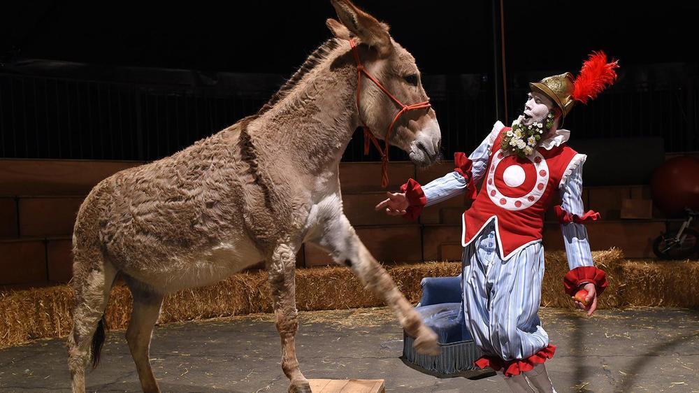 """La """"Chanson de Roland"""" version ménagerie de cirque sera proposée au public de Poésie en arrosoir, à Evologia."""