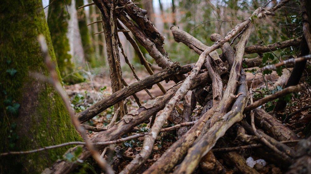 Il est conseillé de prendre des précautions en manipulant du bois, potentiellement contaminé par un hantavirus.