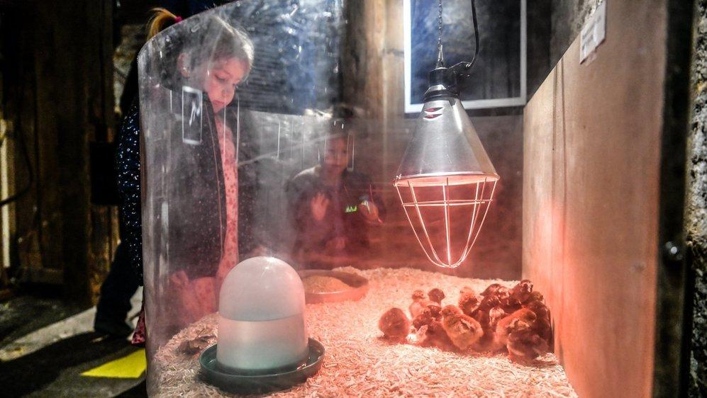 Poussins et lapins au Musée paysan de La Chaux-de-Fonds.