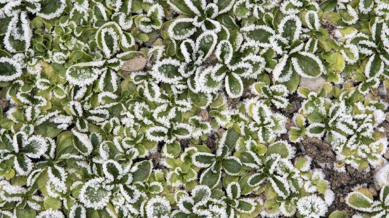 Météo: début de semaine glacial