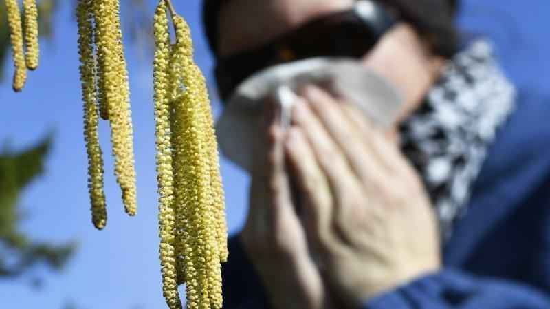 Allergies: le froid a freiné l'apparition des premiers pollens en Suisse