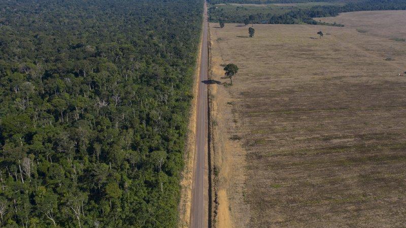 L'étude montre qu'un habitant des pays du G7 est responsable en moyenne de la disparition de quatre arbres chaque année ailleurs dans le monde (ILLUSTRATION).